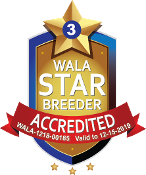 WALA star program