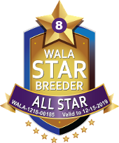 Wala all Star logo